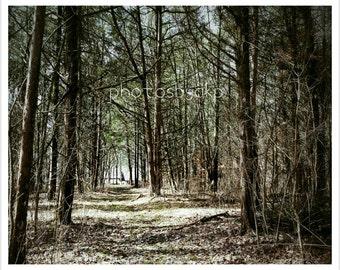 10 x 8 Kentucky Forest Trail photo print