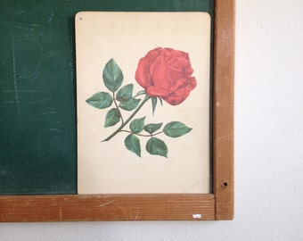 Vintage School Flashcard- Rose