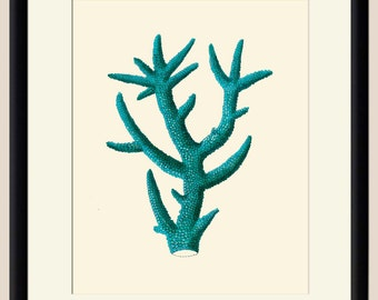 Turquoise Sea Coral 17 Art Print - Nautical Illustration Wall hanging - Beach Decor Poster Vintage Illustration