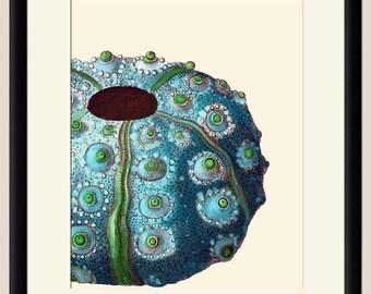 Turquoise Green Sea Urchin Art Print - Nautical Illustration Wall hanging - Beach Decor Poster Vintage Illustration