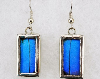 Real Butterfly Earrings - Morpho Didius - Glass and Lead Free Solder