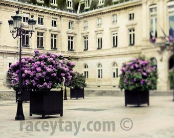 Paris Print, Rustic, Purple, Beige, Neutral Wall Art, Paris Photography, Azaleas, Paris Wall Decor