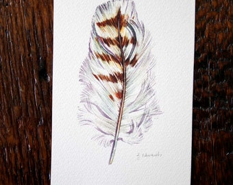 Red Tailed Hawk Feather - Original Watercolour
