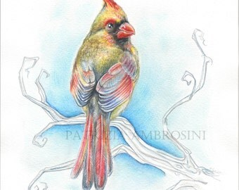 Original big  Watercolour RED cardinal.. NOT A PRINT ..Original Painting