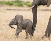 Nursery Wall Art, BABY ELEPHANT PHOTO Nursery Art, Baby Animal Print, Child Room Decor, Safari Nursery Decor, Wall Art, Baby Shower