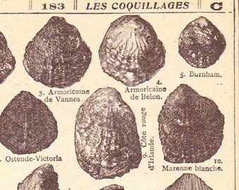 Beautiful Antique Print Book Page 1920s Engraved Ilustrations French Shells Fossils Beach Seaside