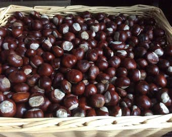 1 pound (approximately 50-60) Ohio Buckeye nuts. Dried and ready for decoration or projects