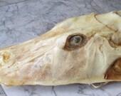 Rare Nautilus Fish Sea Creature - SHIP FREE