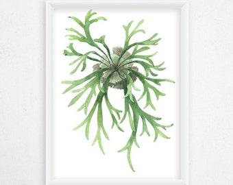Staghorn Fern Print - Botanical Watercolor Art, Fern Painting / 8x11 Fern Watercolor, Botanical Wall Decor