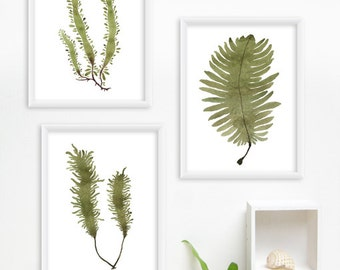 Seaweed Watercolor Print Set, Any THREE Seaweed Art, Sea Botanical Prints / 8x10 OR 8x11 Minimal Wall Art, Home Decor