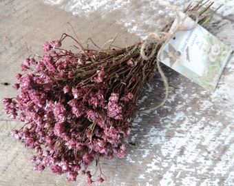 Dried Flowers Bouquet by the Bunch Achilea of Pearl Dried Flower Everlasting Dyed Light Burgundy Magentia Pink Star Flowers Floral Supply