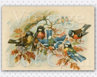 Vintage Clip Art Fall Autumn Harvest Blue Birds and Fall Leaves Victorian Graphic Illustration Printable Digital Large Print Old Card