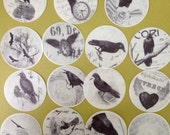 """2"""" Circle Black Raven Crow edible image wafer papers for your iced cookies, cakes, cupcakes, chocolates, baking and decorating"""