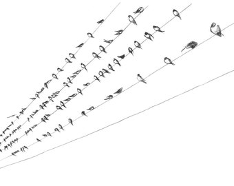 Print - Swallows Gathering to Go - Pencil Drawing
