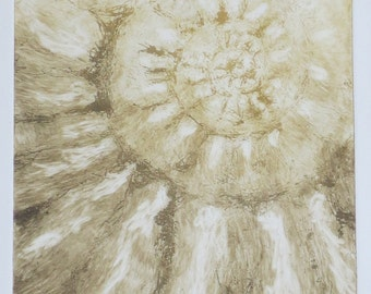 Original ammonite spiral fossil solar etching print jurassic coast