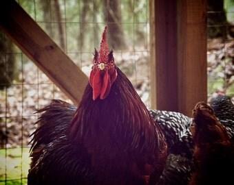 Rustic Photography, Chicken Art Vintage Kitchen Decor Chicken Theme Art, Retro Kitchen Wall Decor, Digital Photography