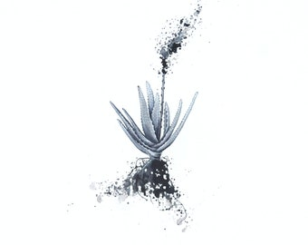 Aloe bloom print on canvas - Black and white
