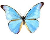 CLIPART Download 3 Blue Butterflies for Scrapbooking etc
