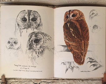 Keith Brockie's Wildlife Sketchbook  - Beautiful Illustrations of Birds and Woodland Animals