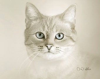 cat  fine art photography, gray white blue pink,pale light gray wall decor for nursery