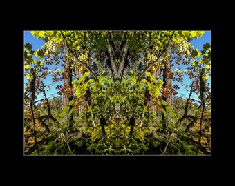 Mirror 1708 16x12_brilliant fall leaves_signed mirrored abstract photography_autumn forest_ Loree Harrell The Mirror Project_ready to ship