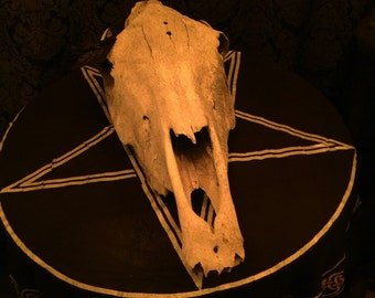 Antique Skull Large Age Worn and Weathered Haunted House Decor  at Gothic Rose Antiques