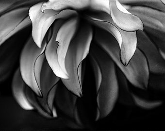 Black and White Photography, macro, flower photography, abstract, dahlia, petals, modern decor, fine art, nature, large, black and white art