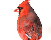 Cardinal Watercolor Painting - Print of watercolor painting. - 5 by 7 print, bird art, wall art, home decor - Christmas decor C2011