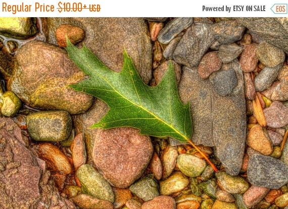 SALE 20% OFF Oak Leaf on Rocks Nature Photography Woodland Home Decor Art Print Autumn Color Green Leaf Nature Earth Tone Wall Art