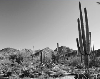 Desert Photography Print Fine Art Arizona Saguaro Cactus Mountains Black and White Southwest Winter Landscape Photography Print.