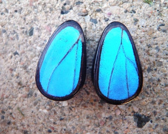 "Real Butterfly Wing Teardrop Plugs 1/2""-1 1/2""- Sunset Moth Plugs (choose your own size)"