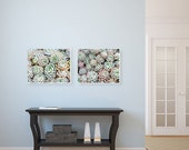 Succulents Photography Canvas Prints- Two Canvas Gallery Wraps, Bathroom Wall Art, Mint Green Pink, Natural Decor, Set of Two Canvases,