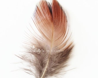 Feather Photography- Pheasant Feather Print, Red Feather Photo, Minimalist Art, Feather Still Life Photo, Nature Print, Boho Home Decor