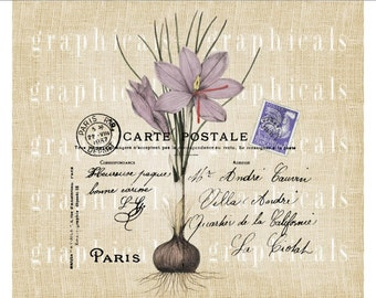 Paris purple crocus flower Carte Postale instant clip art digital download image for fabric transfer decoupage paper burlap pillows No. 578