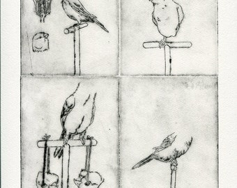 The birds of everyday, gravure