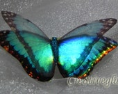 Sea green and Black iridescent resin butterfly