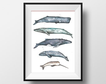 Whale Collection Watercolour Illustration Home Decor Wall Art Giclée print