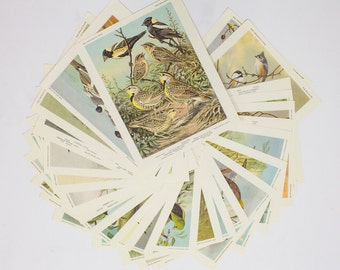 Bird Portraits in Color, Set of 30 Frameable Images, Vintage Ephemera
