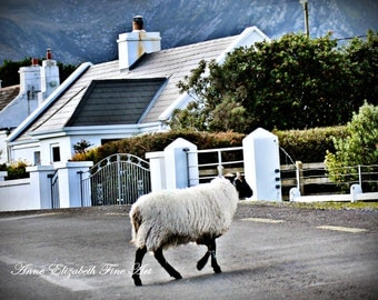 Ireland Photography, Sheep Walking, Irish Cottage, Achill Island, Travel, Rustic, Sheep, Irish Decor, Pub Theme, Ireland Art Print, Lamb