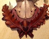 Roe Deer Trophy Antlers