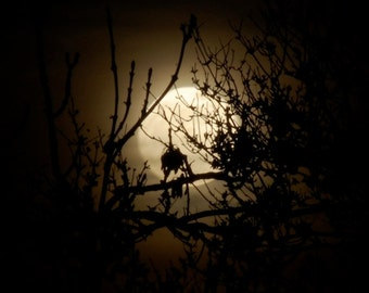 Equinox Full Moon print, Spring Equinox Super-moon photo, black & gold moon behind trees, night sky, Moon phase wall art, leaf silhouette