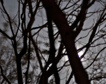 Dreamscape no14. Abstract Moonlight, dreamy tree with moon behind, haunting moonscape,  surreal night Sky, shadows, branches