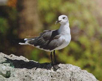Seagull Posing Photo, Sea Gull Bird Picture, Seaside Beach House Nature, Home Decor Wall Art Nautical Coastal Lake Tropical Decor