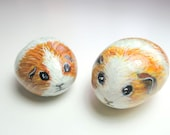 Pair of Silky Golden Brown and White Guinea Pigs