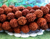 7 to 8mm Rudraksha Seeds, 108 Pieces Rudraksha Beads, Prayer beads, NAT-067-108