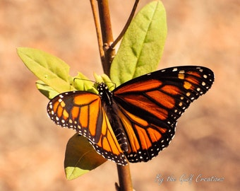 Butterfly, Plant, Nature Photography, Glossy, Fine Art Photography, 8x10, Matted