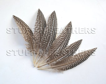 Guinea wing feathers trimmed, natural black brown white polka dot, spotted feathers, loose feathers / 6-7 in (15-18 cm) long, 6 pcs / F173-6