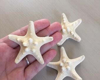 Knobby starfish hair clip