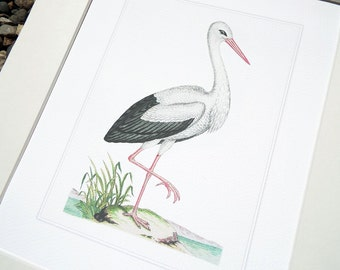 White Crane 3 with Pale Blue Water Fine Art Archival Print