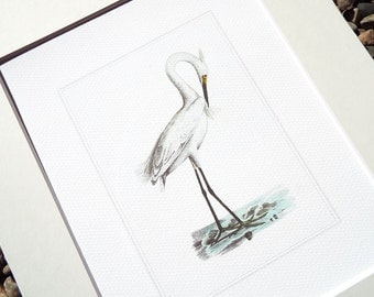 White Crane Standing in Soft Blue Water Fine Art Archival Print